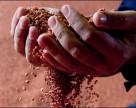 Беларуськалий увеличил в 2014 году производство калийных удобрений