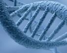 Генетическое разнообразие – скрытый инструмент в борьбе c изменением климата