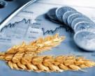 Почему Украина наращивает объем поставок пшеницы в Турцию