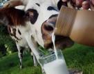 Молоко: ажиотажа не случилось