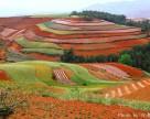 Новый законопроект уменьшит коррупцию в управлении сельхозземлями