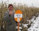 Как выбрать семена кукурузы для суровой зимы