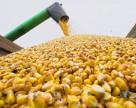 Через порушення фітосанітарних вимог затриманий на Херсонщині вантаж насіння буде повернуто до США