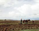 Как владельцев земельных паев подвели под штрафы