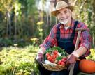 Чего опасаться украинским овощеводам?