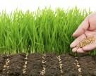 Как Syngenta, Monsanto и BASF страхуют посевы украинских аграриев?