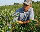 Голубика и малина – лидеры спроса на посадочный материал