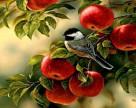 Украина получит рекордный урожай яблок