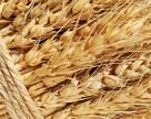 Агрохолдинг Ахметова потерял 63% урожая из-за АТО