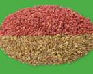 ALFA Smart Agro повідомила невтішні результати моніторингу насіння