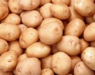 Как засуха отразится на урожае картофеля в Украине