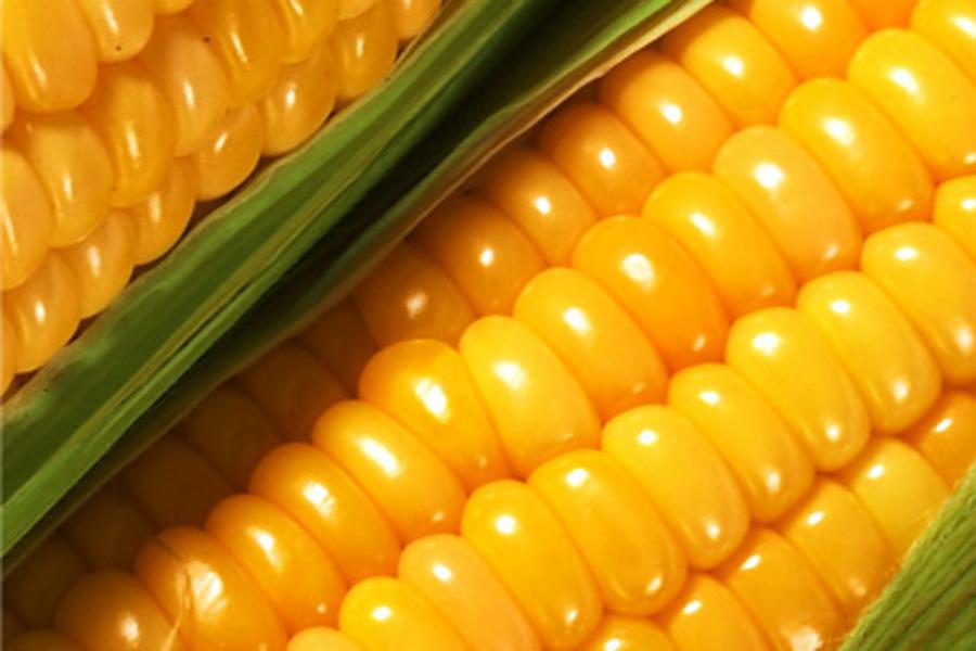 Пытались вынести кукурузу из двора: Грабителей поймали с поличным