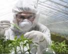 Швейцарское правительство продлевает мораторий на ГМО