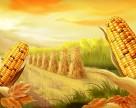 В Украине падает рентабельность производства кукурузы и пшеницы