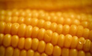 кукуруза текстура