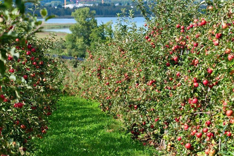 26f2a2866979d Как купить землю под сад в Украине