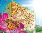 Спасти пчеловодство в Украине