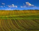Агрохолдинг «Сварог Вест Групп» выпускает  облигации