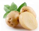 В Канаде одобрен новый сорт ГМО-картофеля