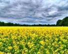 На юге Украины вымерзли озимые рапс и ячмень, повреждены посевы гороха