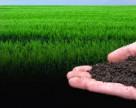 В Швейцарии усиливают контроль содержания пестицидов в почве