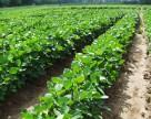 Органическое земледелие: Украина плюс Германия