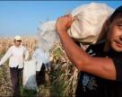 Подстроить сельское хозяйство под климат