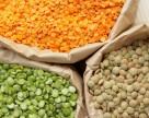 Украина будет наращивать производство нишевых бобов: чечевицы, фасоли и нута