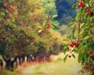 Овощи, клубника и плодовые деревья пострадали от гроз