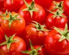 Bayer объявила о выходе на рынок томатов, устойчивых к ToBRFV