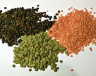 Гербициды для чечевицы: выигрышные комбинации