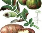 Российские студенты разработали приложение для предупреждения заболеваний растений
