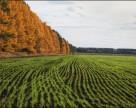 Озимые в Украине не взошли на 113 тыс га