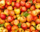 США может собрать один из лучших урожаев яблока