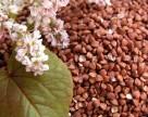 Мінагрополітики очікує на достатній урожай гречки