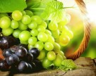 В Болгарии возлагают большие надежды на урожай винограда