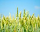 Цены на сельхозтовары находятся на минимуме