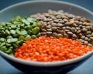 Украину ждет бум выращивания чечевицы