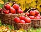 В Казахстане избыток яблок