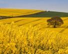 Новий земельний законопроект: ВАР проведе підтримуючий мітинг