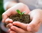 Органічне добриво – запорука гарних врожаїв