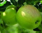Нюансы во избежание рисков в плодовом саду