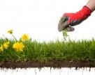 Шесть шагов, которые помогут предотвратить развитие резистентности у сорняков