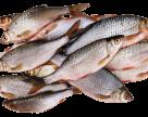 В Україні на рибну селекцію виділили 40 млн грн