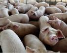 Свинина в магазині: як змінилися ціни за рік