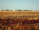 Теневой рынок сельхозземель в Украине активизируется в  2017 году