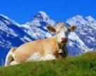 В Швейцарии сделали часы из сыра стоимостью более миллиона франков