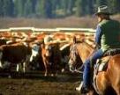 США увеличат производство говядины и свинины в 2017 году