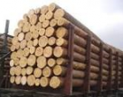 Держлісагентство запроваджує обмеження під час експорту деревини