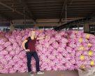 Украинский производитель чеснока перенимает китайский опыт